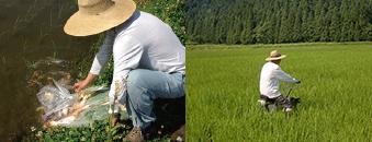 南魚沼産最高級特別栽培米コシヒカリ「こいみのり」 南魚沼大久保農園株式会社